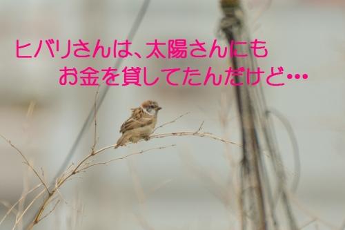 050_20150701182221f4e.jpg