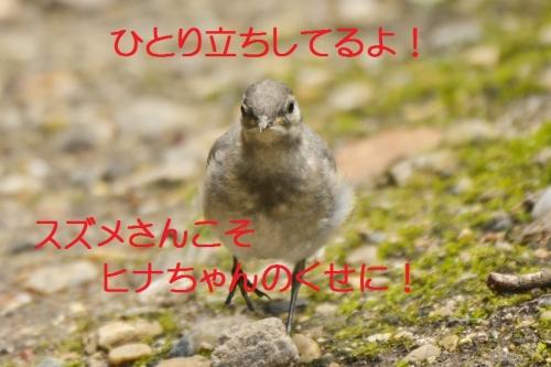 050_20150710185205bd5.jpg