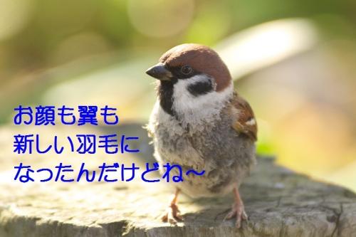 060_201501272041024de.jpg