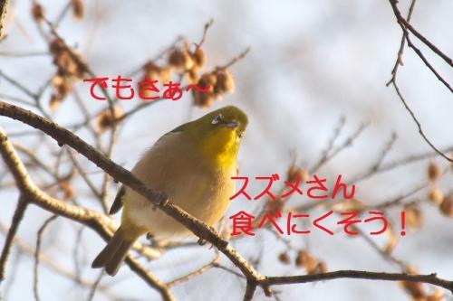 060_20150201193525912.jpg