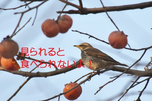 060_201502032042539a0.jpg