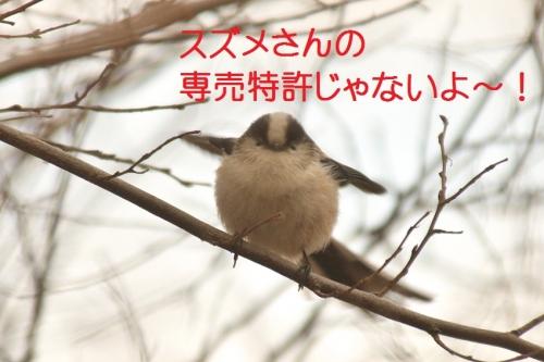 060_20150206224749631.jpg