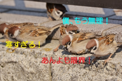 060_20150228202535ea8.jpg