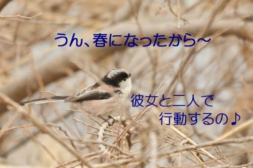 060_20150320212338086.jpg