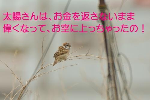 060_20150701182246e24.jpg