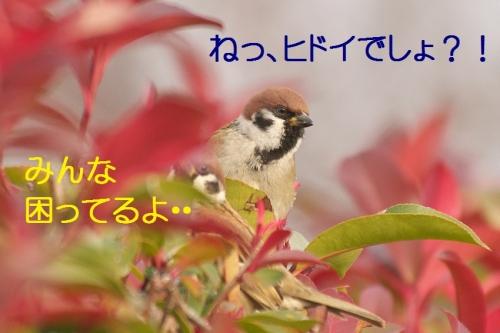070_201501142130120ac.jpg