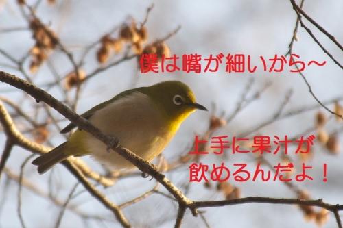070_20150201193527b2d.jpg