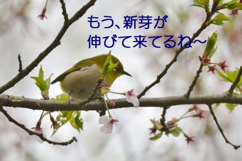 080_2015041117522934d.jpg
