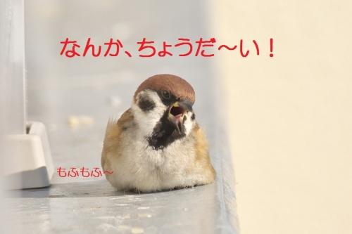 090_20150120195924078.jpg