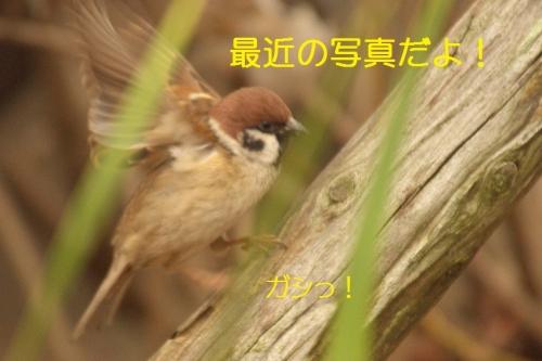 090_201501232112114df.jpg