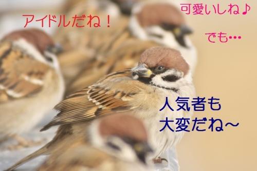 090_20150125214244ac3.jpg