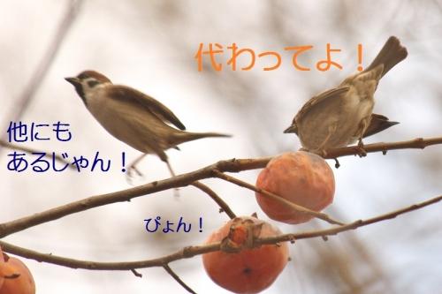 090_2015020320443111c.jpg