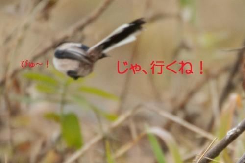 090_201502252118189ee.jpg