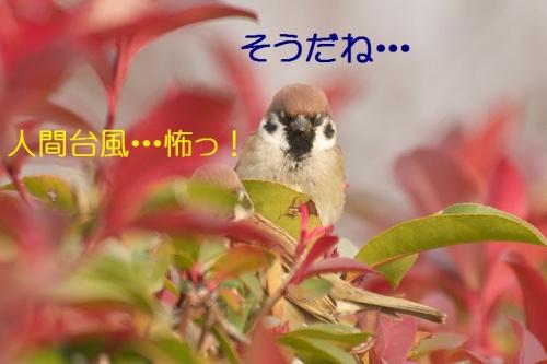 100_201501142130163fe.jpg