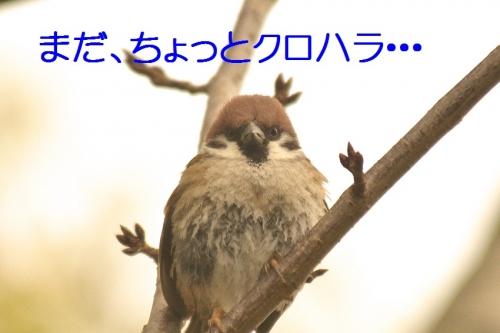 100_20150127204108ac5.jpg