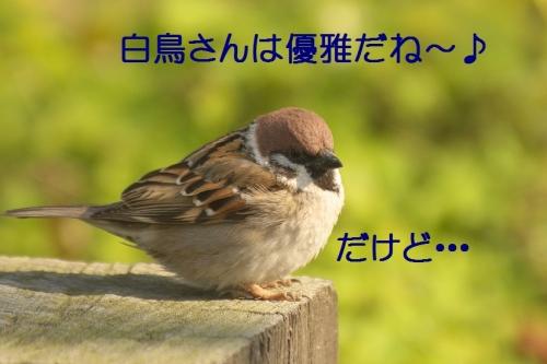 100_20150304215206238.jpg
