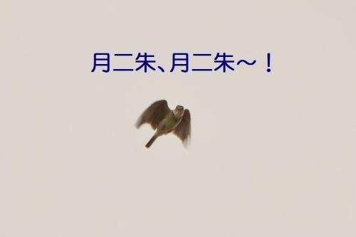 100_20150701182251b1b.jpg