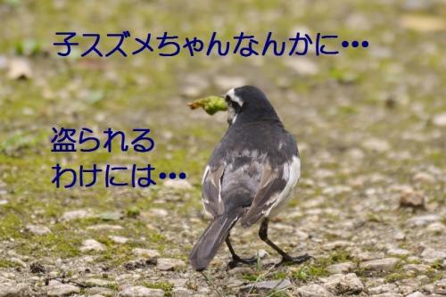 100_201507092151430d1.jpg
