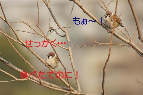 110_20150126221347c6f.jpg