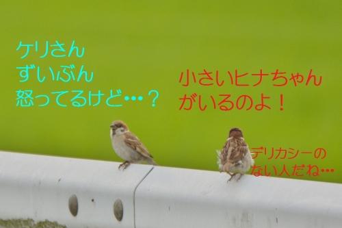 110_20150702182441235.jpg