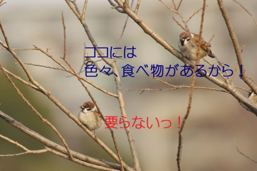 120_20150126221349b2a.jpg