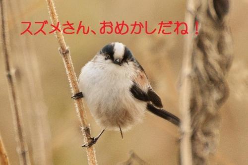 120_20150225211943d1d.jpg