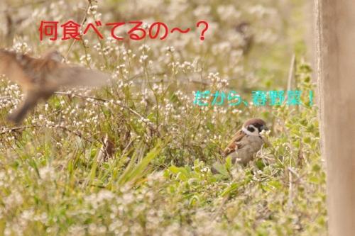 120_201503271947052e2.jpg