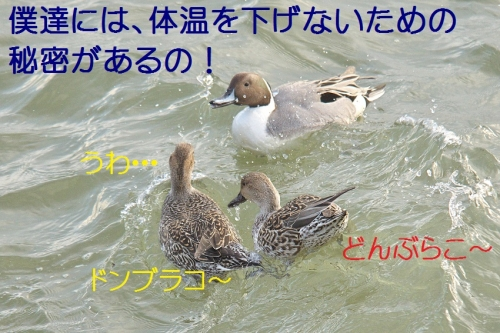 130_20150118183629f6f.jpg