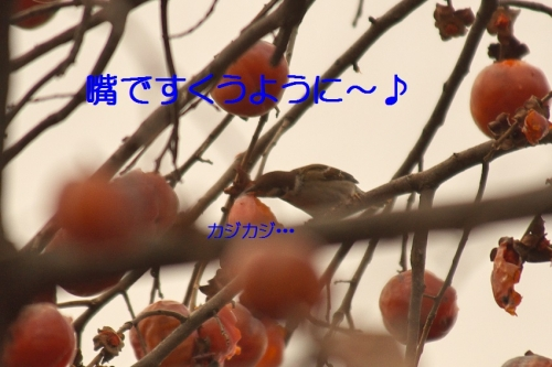 130_20150201194027c7b.jpg