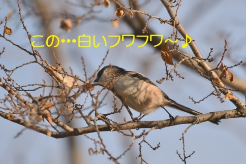 130_20150224190844591.jpg