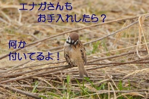 130_20150225211940dae.jpg