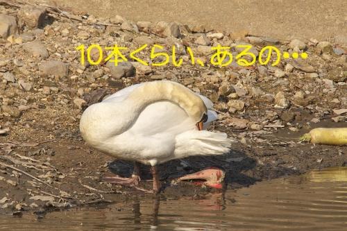 130_20150304215302719.jpg
