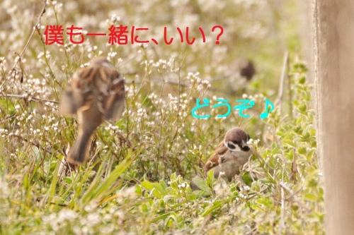 130_20150327194705e0d.jpg