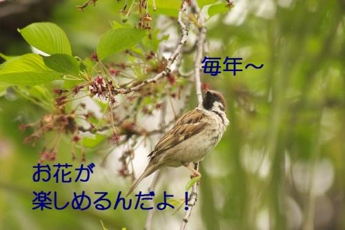 130_20150505022418632.jpg