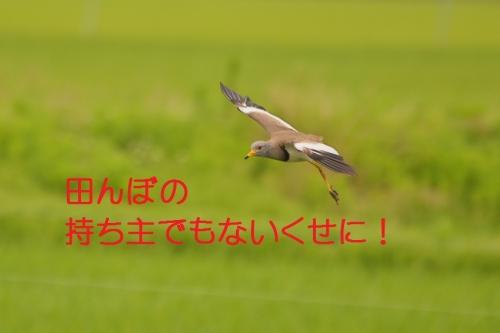 130_201507021825264b9.jpg