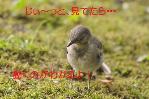 130_201507101853142ed.jpg