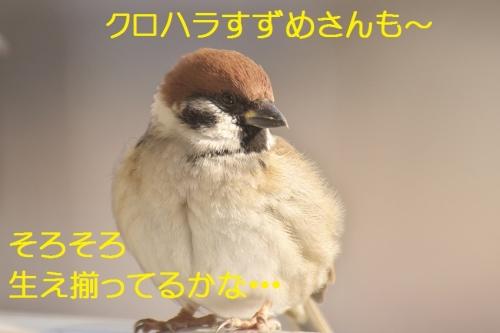 140_201501272042172a3.jpg
