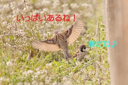 140_201503271947062b4.jpg