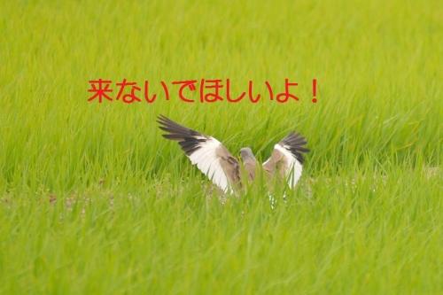 140_201507021825285f4.jpg