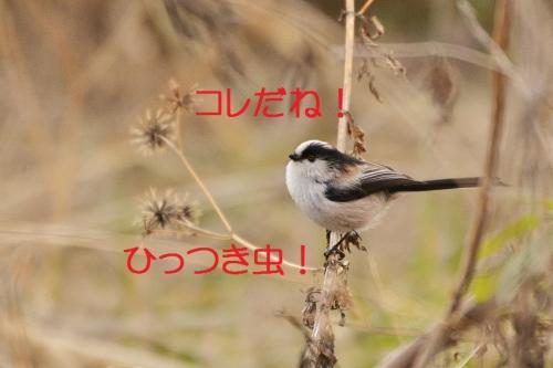 150_2015022521194531f.jpg