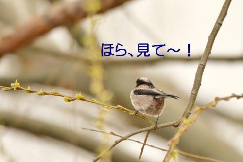 150_20150320212519ef9.jpg