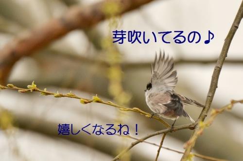 160_20150320213225150.jpg