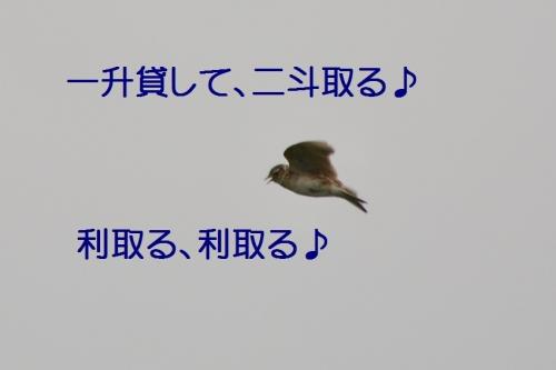 160_201507011825374f3.jpg