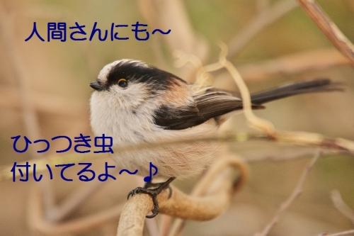 170_20150225212032be1.jpg