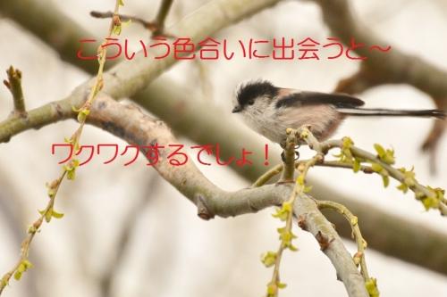 170_20150320213227398.jpg
