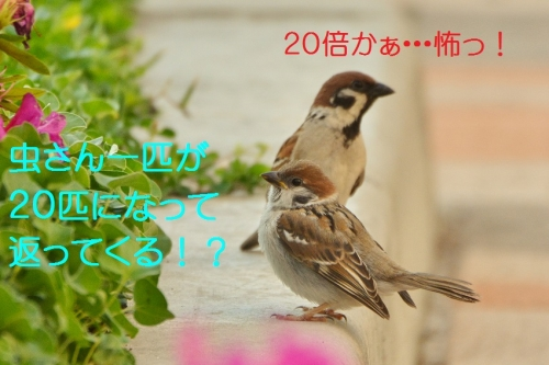 170_2015070118253923f.jpg