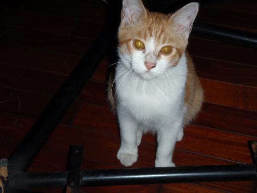 ネコ吉 (14)