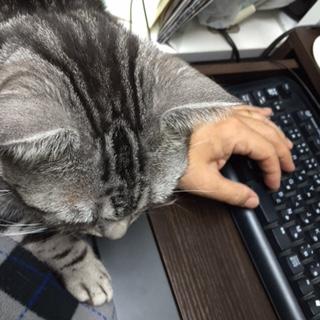 猫 邪魔 えいっ