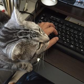 猫 邪魔 ねえ