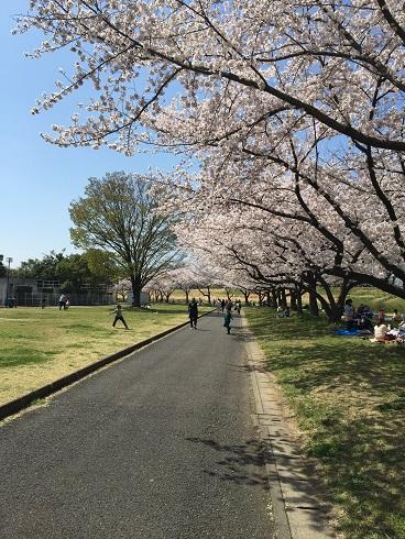 111川越桜